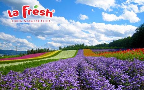 Vườn hoa thành phố Đà Lạt vẻ đẹp thơ mộng
